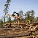 Прокуратура Саратовской области обязала лесхозы сделать энергопаспорт