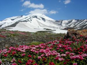 Трутнев: Камчатка должна сделать ставку на развитие геотермальной энергетики